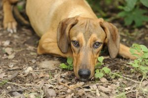10 Signs Of Cancer In Pets